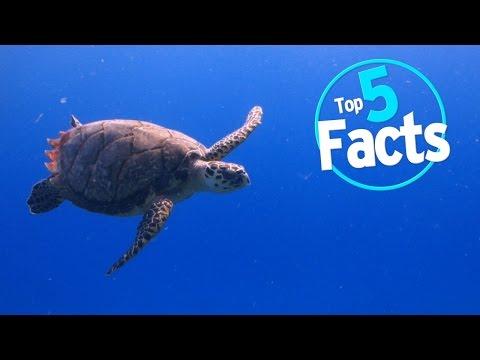 Top 5 Endangered Animal Facts