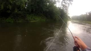 Ловля нахлыстом на реке Белой