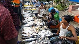 Incredible fresh country fish available big fish market in rural village Bangladesh. Huge fresh deshi fish available here.