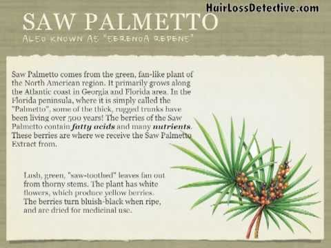 Saw Palmetto: Natural Treatment To Help Stop Hair Loss And Regrow Your Hair With No Side Effects