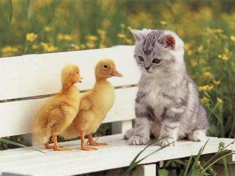 Có ai thích mèo không? Cực Đáng Iu