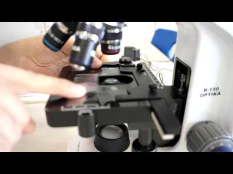A-Level Biology: Calibration of Eyepiece Graticule with stage micrometer