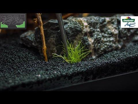 So machen Sie Ihr Aquarium startklar - Dehner Aqua Start 80