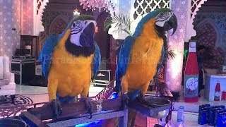 macaw,kakatua,peacock very informative video only on (PBI) (Udru/Hindi)