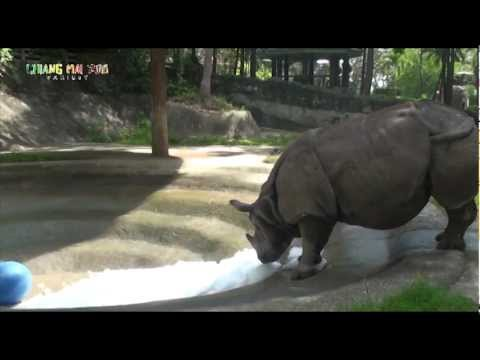 World Rhino Day @CHIANGMAI ZOO