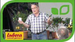 Der Weg der subtropischen Zitruspflanzen zu uns Richtung Norden