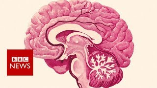A report says these brain boosters could reduce the number of dementia cases by a third.Please subscribe HERE http://bit.ly/1rbfUogWorld In Pictures https://www.youtube.com/playlist?list=PLS3XGZxi7cBX37n4R0UGJN-TLiQOm7ZTPBig Hitters https://www.youtube.com/playlist?list=PLS3XGZxi7cBUME-LUrFkDwFmiEc3jwMXPJust Good News https://www.youtube.com/playlist?list=PLS3XGZxi7cBUsYo_P26cjihXLN-k3w246