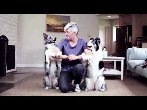 Hugs From Dogs!       -      Dog Tricks Training
