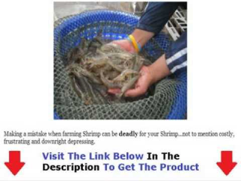 Shrimp Farming Info Review & Bonus WATCH FIRST Bonus + Discount