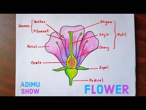 How to draw and label a flower 🌷step by step tutorial