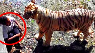 Video 8 Most Shocking Animal Attacks Caught on Tape MP3, 3GP, MP4, WEBM, AVI, FLV Mei 2017