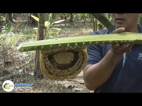 Bắt Tổ Ong Ruồi Về Um Dừa Lá Cách | Hội Ngộ Miền Tây - Tập 38 - Thời lượng: 25:03.