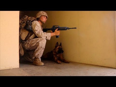 MOUT With Military Working Dogs