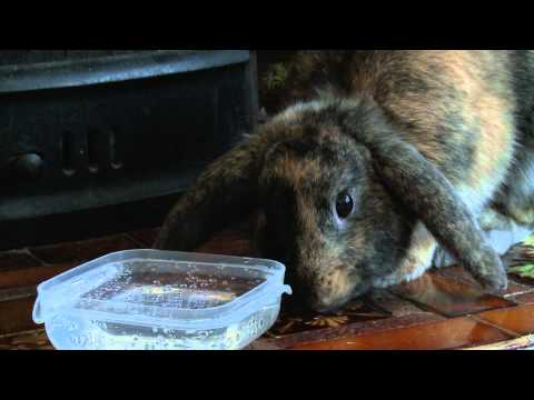 Cute video rabbits