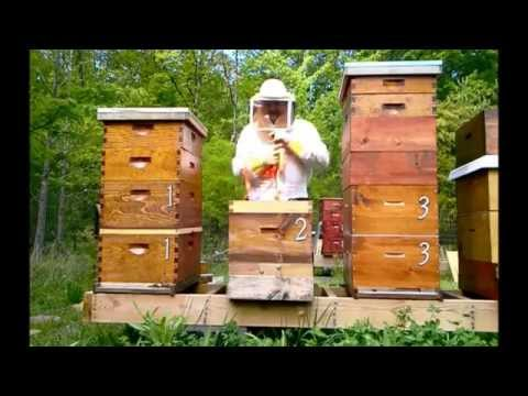 3rd Swarm Burnley Farm Apiary 2013