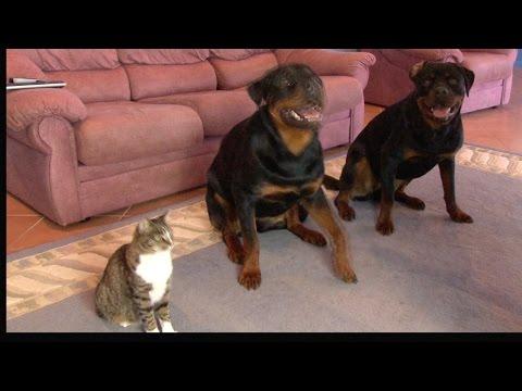 l'educazione dei due cani è impeccabile, ma il terzo è da applauso!