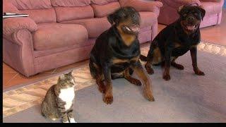 Кот, воспитанный с собаками