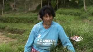 Argao Philippines  city images : Cultural Landscapes of Upland Terrace Farming in Barangay Butong Argao, Cebu Philippines