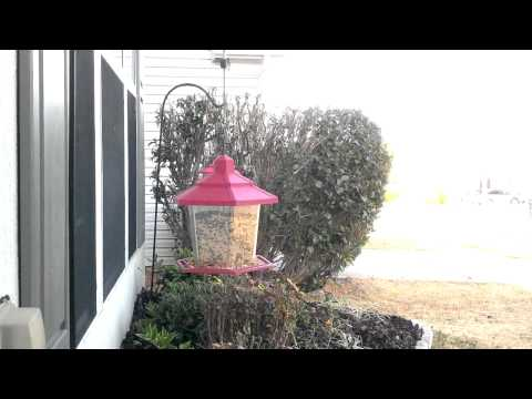 LAWNtalk101!!!!!(birding)#1how to attract birds to your landscape!!!!!