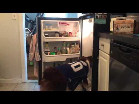 WATCH: Best Dog Trick Ever?