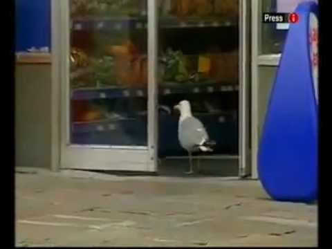 Shoplifting Seagull Caught On Camera