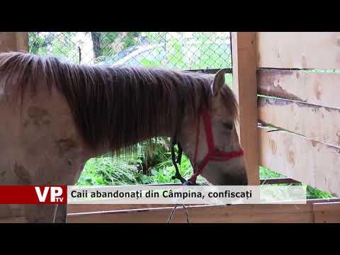 Caii abandonați din Câmpina, confiscați
