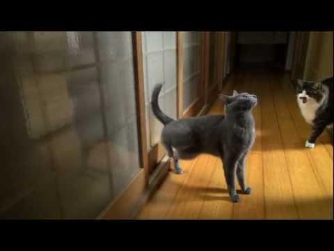 Katt med lite ilska i bakbenen