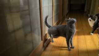 Котка, която знае как да си почука на вратата