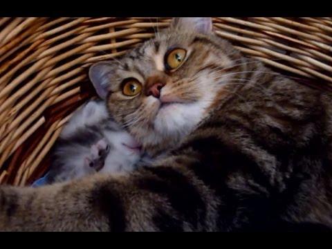 Kittensyoutube on Twee Weken Oud Kitten Wordt Overstelpt Door Liefde Te Schattig