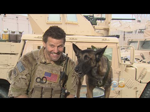 David Boreanaz's Canine Sidekick Becoming Must-See On 'SEAL Team'