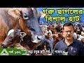 Krishi 132 Cow Hat, pabna Cow Market বকনা,গাভী ও ষাড় গরুর হাট, বেড়া চতুর হাট পাবনা ।