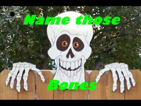 name those bones