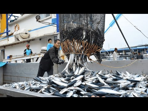 Big Catch Fishing in The Deep Sea With Big Boat - Amazing Tuna Fish Processing Skill - Thời lượng: 12 phút.
