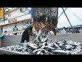 Download Lagu Big Catch Fishing in The Deep Sea With Big Boat - Amazing Tuna Fish Processing Skill Mp3 Free