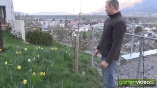 Redlove und Paradis - Apfelbäumchen im eigenen Garten