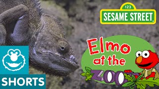 What do Zoo Animals Eat? (Elmo at the Zoo #2)
