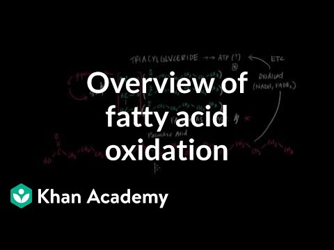 Overview of Fatty Acid Oxidation