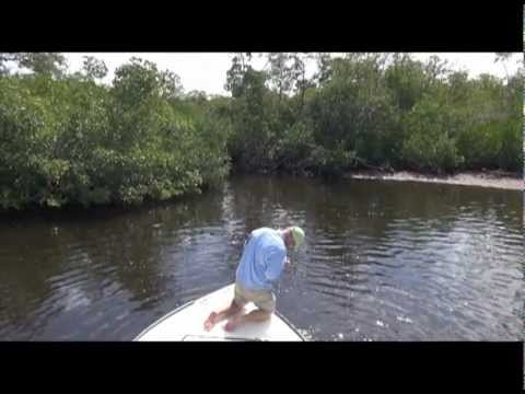Great salt water fly fishing Snook near Pine Island, Florida