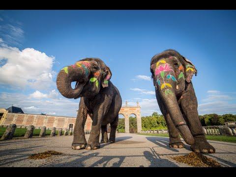 Des éléphants à son mariage : Mariage bollywood de Cinéma Evénement Animalier