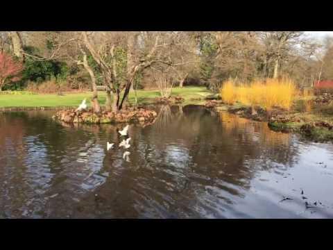 Savill Garden in Winter Feb 2017, Windsor Great Park, Englefield Green, Egham, Surrey #savillgarden
