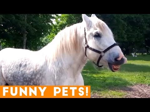 Funny animals - Funniest Pets & Animals of the Week Compilation May 2018  Hilarious Try Not to Laugh Animals Fail
