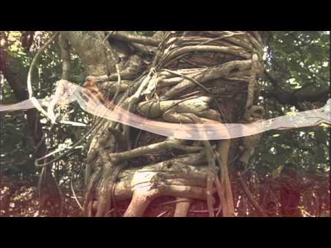 Adhesions-Crippling Abdominal Pain