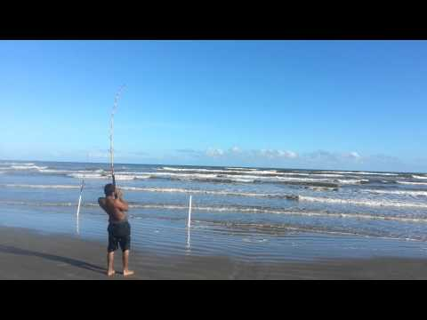 Bull Red – Galveston, TX Oct 2014