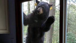 Young Boy Makes A Bold Move To Save His Mom After A Bear Breaks Into Their House by Did You Know Animals?