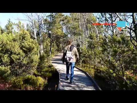 Šumavská rašeliniště - slatě a mokřady