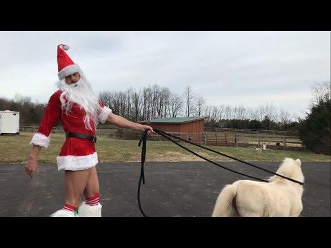 Így kell pónival mulatni karácsony reggelén