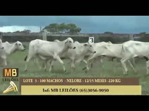 189º LEILÃO VIRTUAL MB LEILÕES