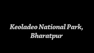 Bharatpur India  City new picture : India's birding paradise - Keoladeo National Park, Bharatpur