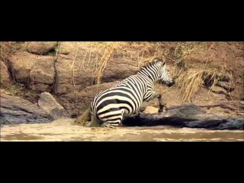 dikaya-afrika-video
