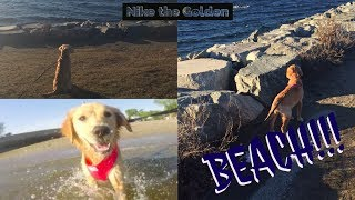 This is nikes first time at the beach!!! She absolutely loved it!!! Hope you enjoyed the little edit!Please leave a paws up if you enjoyed, love you all! Subscribe if you are new, and see you in the next one! Byeruff ruff